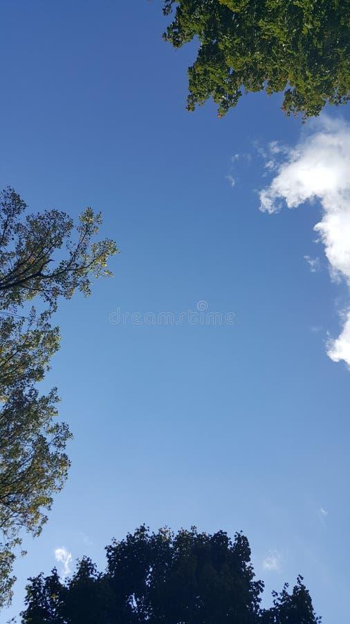 Kłaść w dół patrzeć drzewa fotografia stock