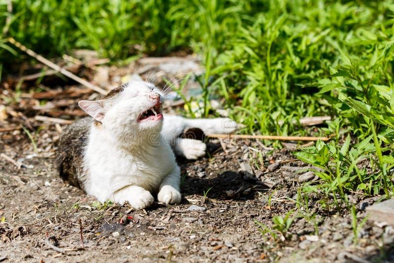 Kłamać nadużywającego kota obraz royalty free