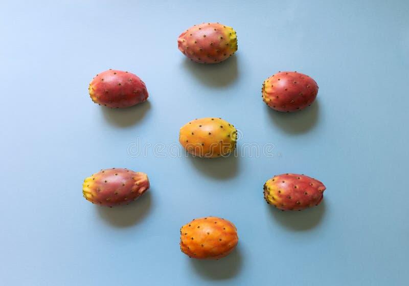 Kłującej bonkrety kaktusa grupy owoc dojrzała Opuntia indica na błękitnym tle zdjęcie royalty free