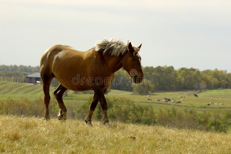 Kłusował Koń. Fotografia Stock
