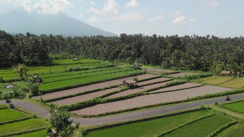 4K aerial flying video of young couple riding scooter on the rice field close to a greeat mountain volcano Agung. Bali. Island. Indonesia royalty free stock images