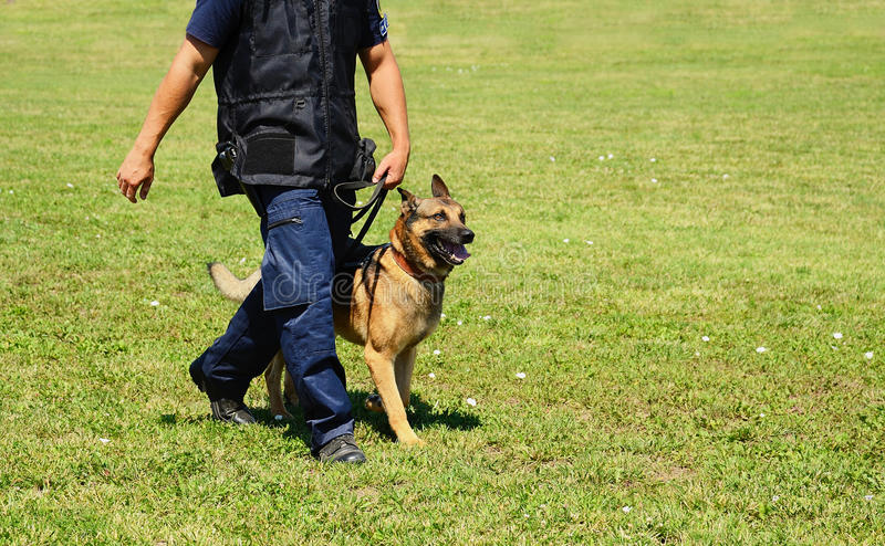 K9 police officer with his dog. In training royalty free stock photography
