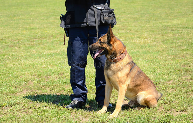 K9 police officer with his dog. In training stock image