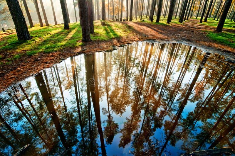 Kałuża w lesie zdjęcie royalty free