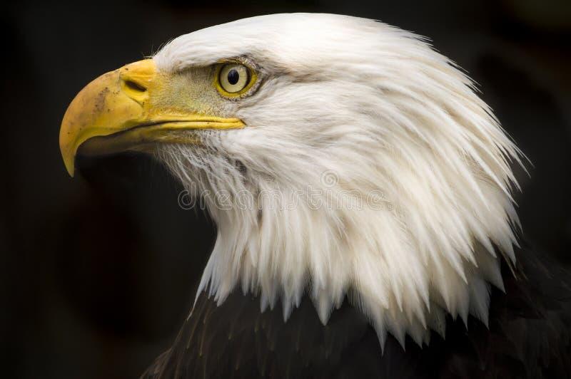 Kaal Eagle