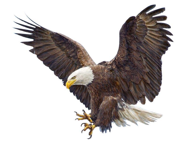 Kaal Eagle die duikvluchtvector landen