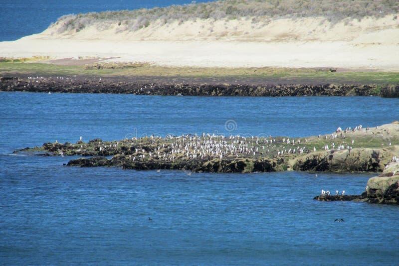Kaap met vogels en witte klippen in de oceaan stock fotografie