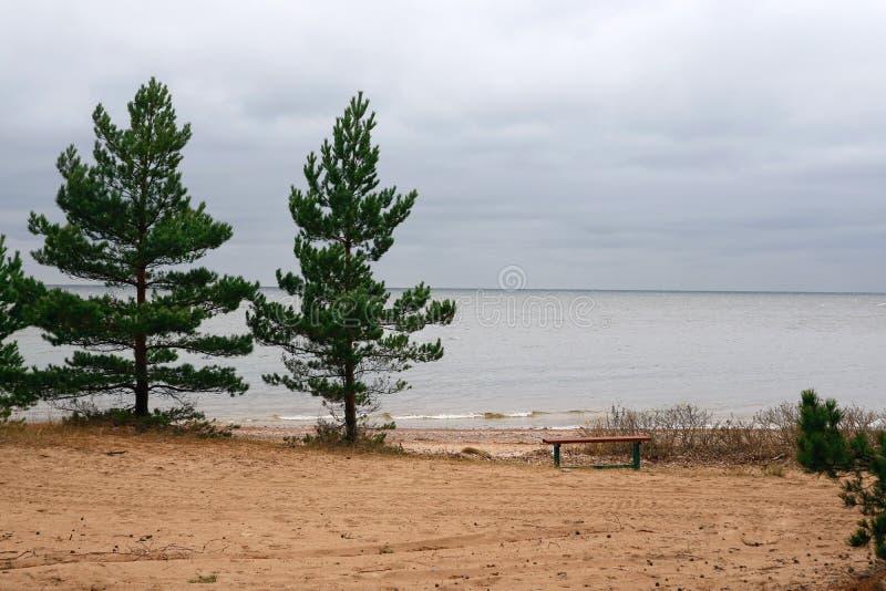 Kaap Zeekust van de Golf van Finland een plaats van rust dichtbij het bos stock afbeeldingen