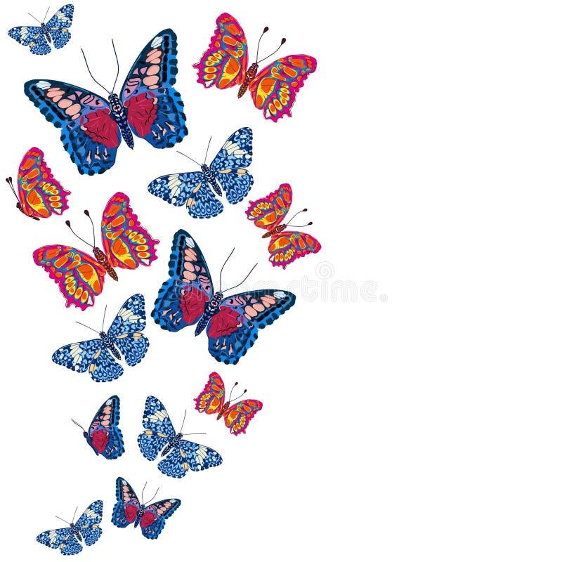 Kaart met kleurrijke vlinders royalty-vrije illustratie