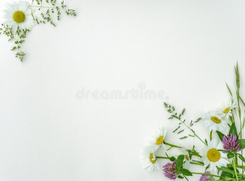 Kaarten als achtergrond die van golfdocument worden gemaakt dat wilde bloemen en kruiden in de vorm van een kader met een plaats  stock afbeeldingen