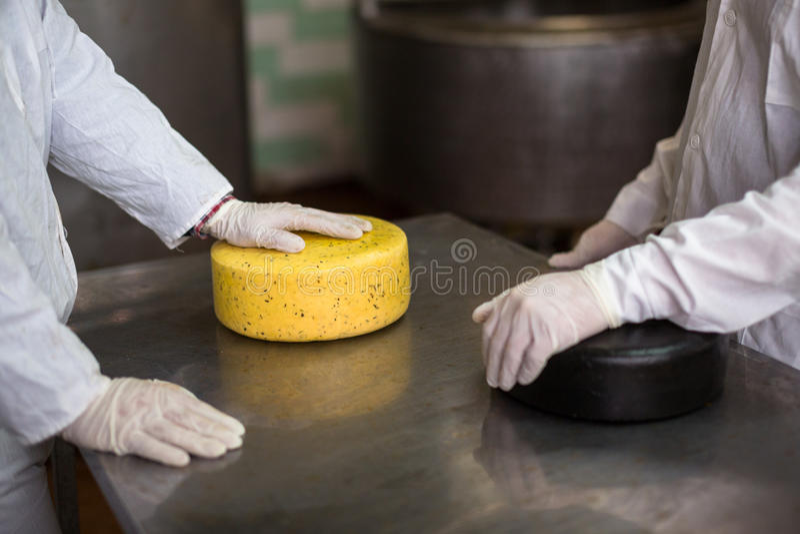 Kaas bij de zuivelfabriek, kaas met twee werkende hoofden royalty-vrije stock foto's