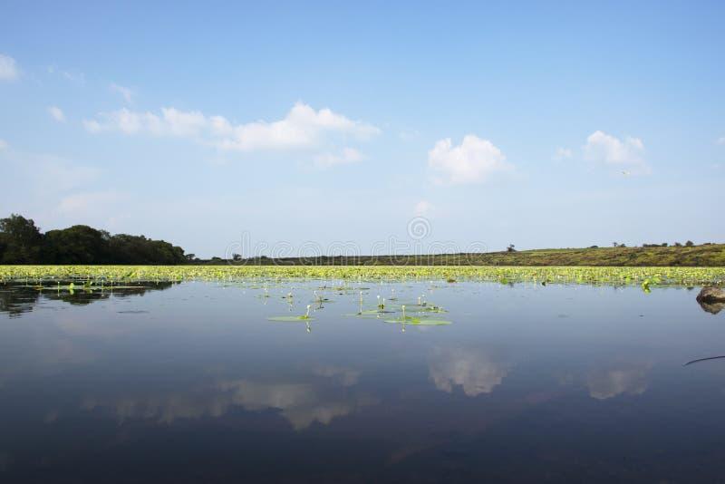 Kaas sjö upptill av den Kaas platån med vita Lotus att växa fotografering för bildbyråer