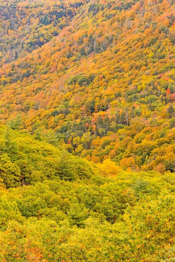 Kaaterskill Clove nei colori d'autunno fotografia stock