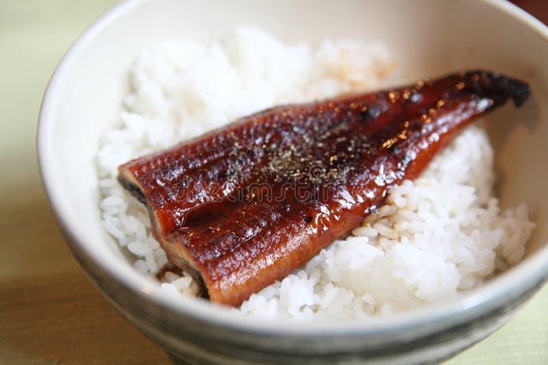 Kabayaki eel on rice japanese style stock images