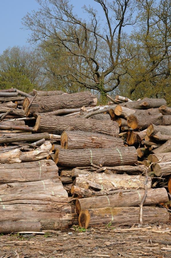 Kabel im Aincourt Wald lizenzfreies stockbild