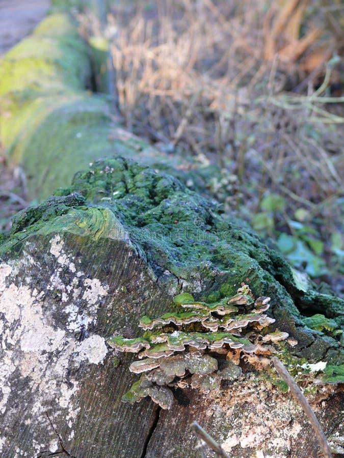 Kabel mit Pilzen stockbilder