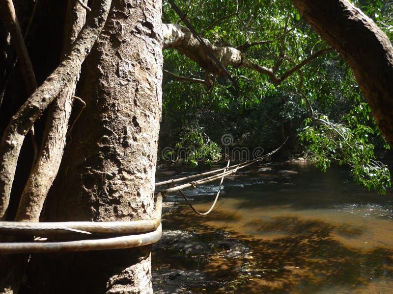 Kabelbrug over rivier in het nationale park van Khao Yai, Thailand royalty-vrije stock afbeeldingen