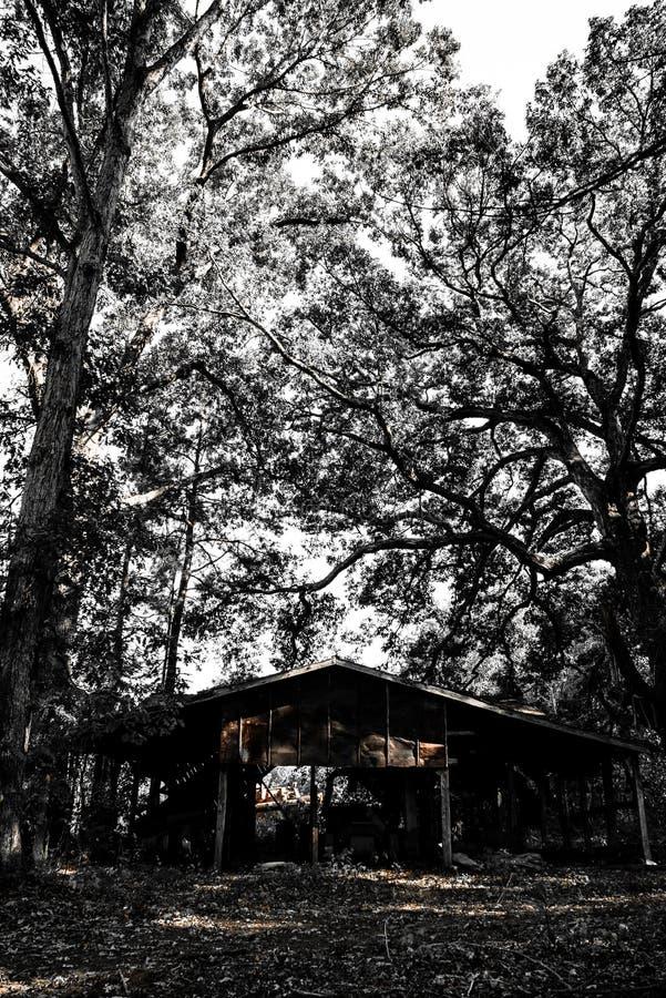 Kabina W drewnach zdjęcie stock