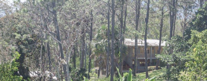 Kabine in den Bergen, umgeben durch Kiefernwalddominikanische Republik, stockbild