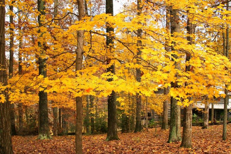 Kabine im Holz mit Herbst stockbild