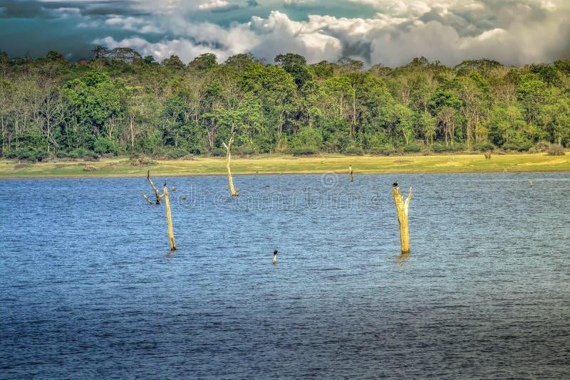Kabini-Stauwasser mit schönem Hintergrund im Wald stockfotografie