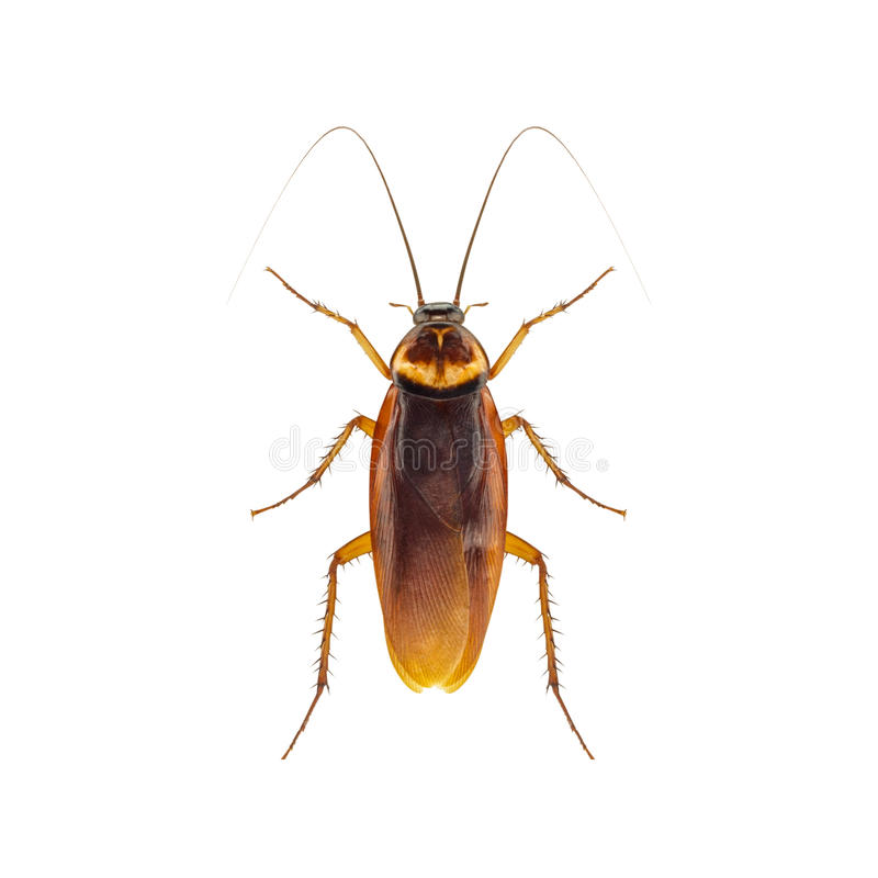 kackerlacka royaltyfria bilder