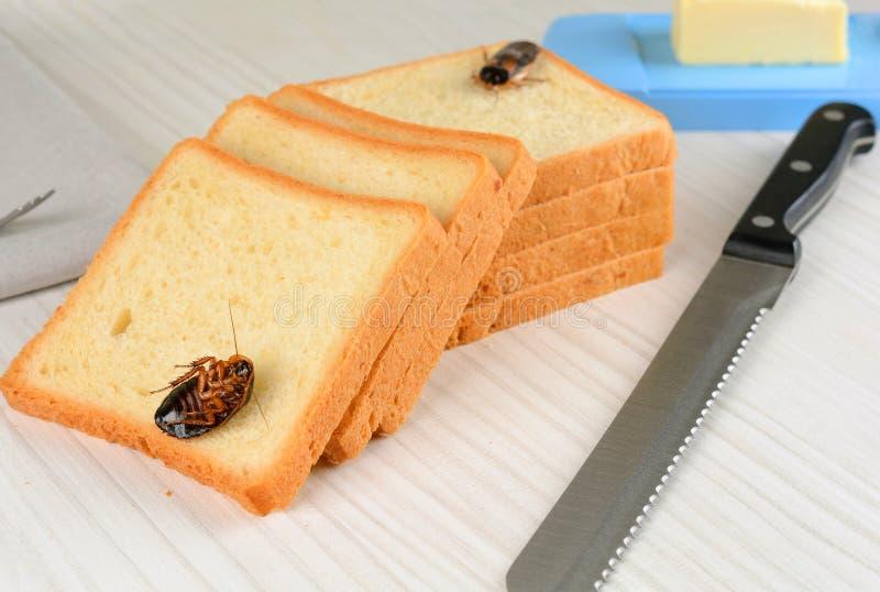Kackerlacka på mat i köket royaltyfri foto