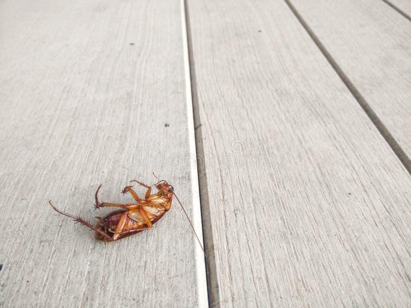 Kackerlacka som dödas på golvet royaltyfria bilder