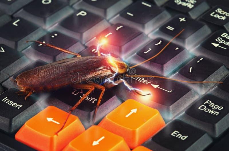 Kackerlacka som klättrar på tangentbordet för att framlägga om datoren som anfallas från virus royaltyfri bild