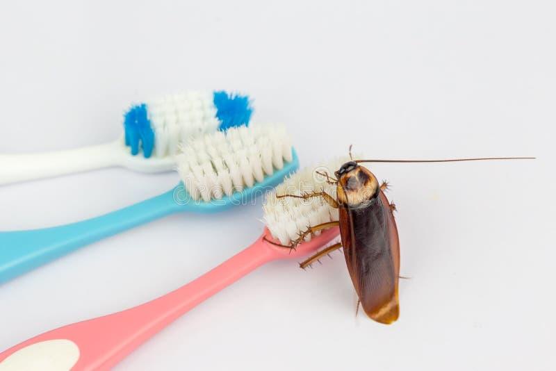 Kackerlackor är på tandborsten i badrummet, arkivbilder