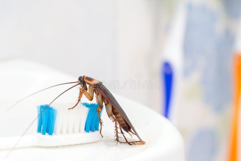 Kackerlackor är på tandborsten i badrummet, arkivbild