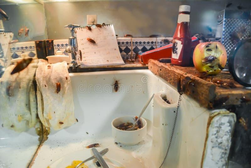 Kackerlackor i ett smutsigt kök arkivfoton