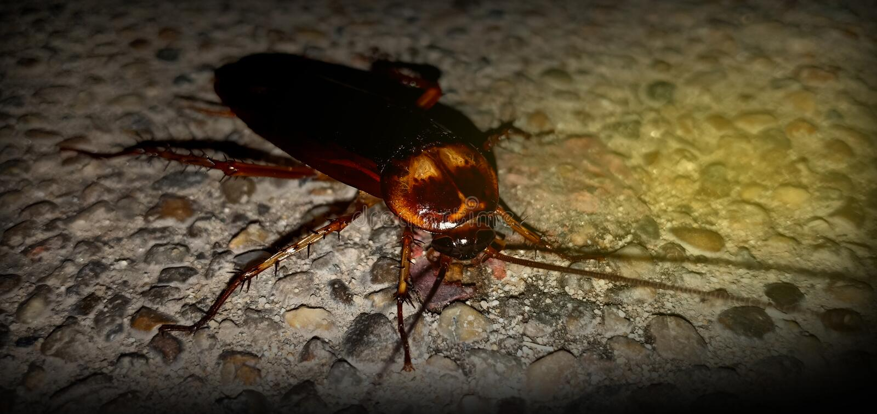Kackerlackor med cementgolvet fotografering för bildbyråer