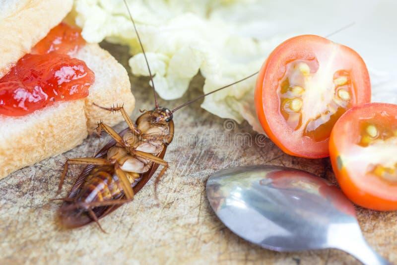 Kackerlackor som absolut ligger på skärbrädaträt Problemet i huset på grund av kackerlackor som bor i köket Kackerlacka e royaltyfri foto