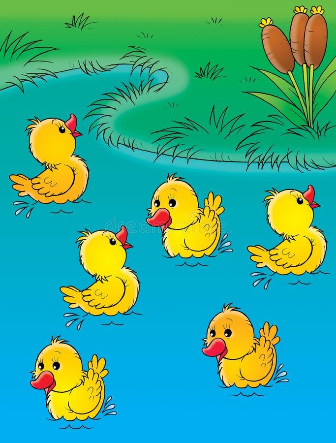 kaczątka royalty ilustracja