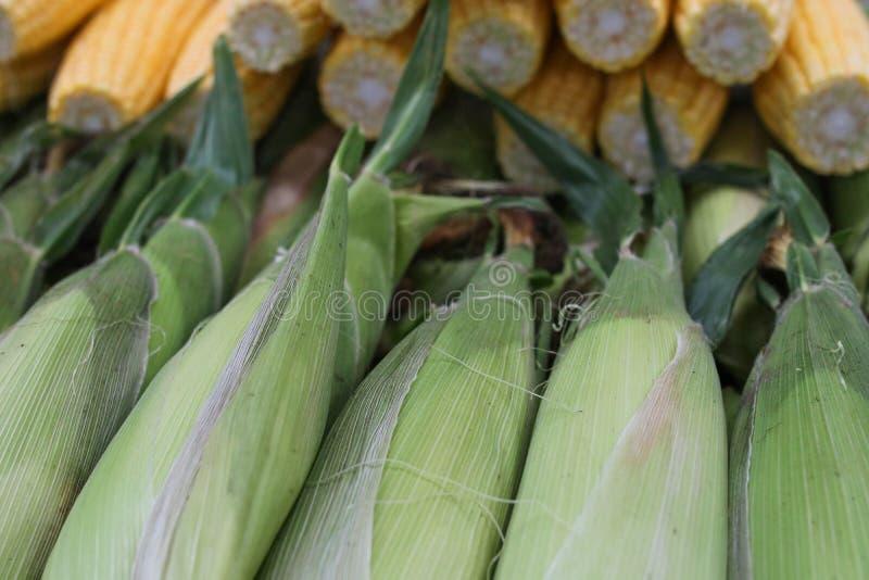 Download Kaczan zdjęcie stock. Obraz złożonej z ucho, sezon, uprawy - 106906436