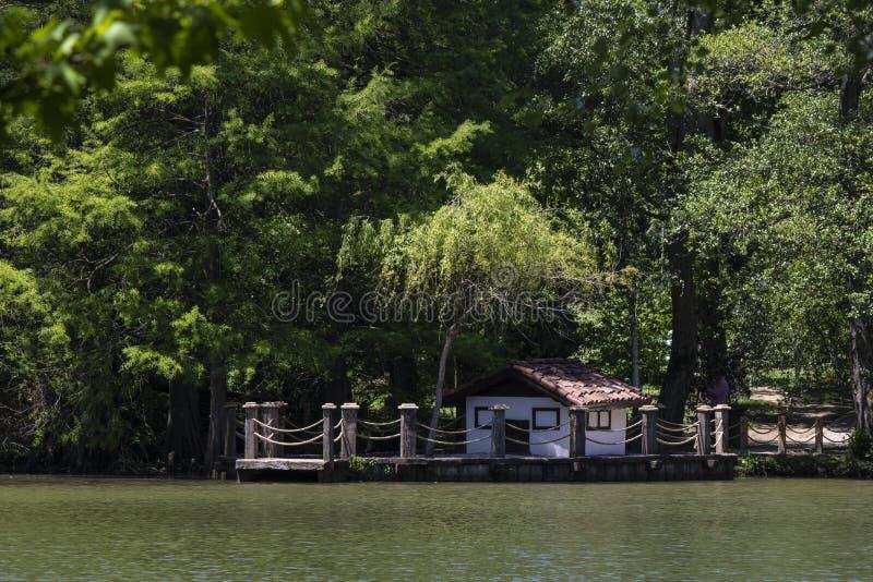 Kaczka dom na jeziorze zdjęcia stock