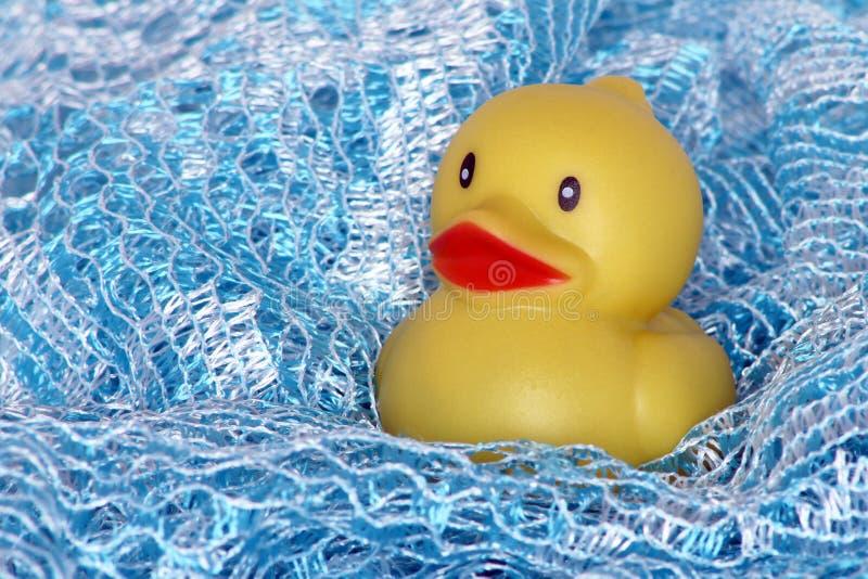 kaczka kąpielowy czas fotografia stock
