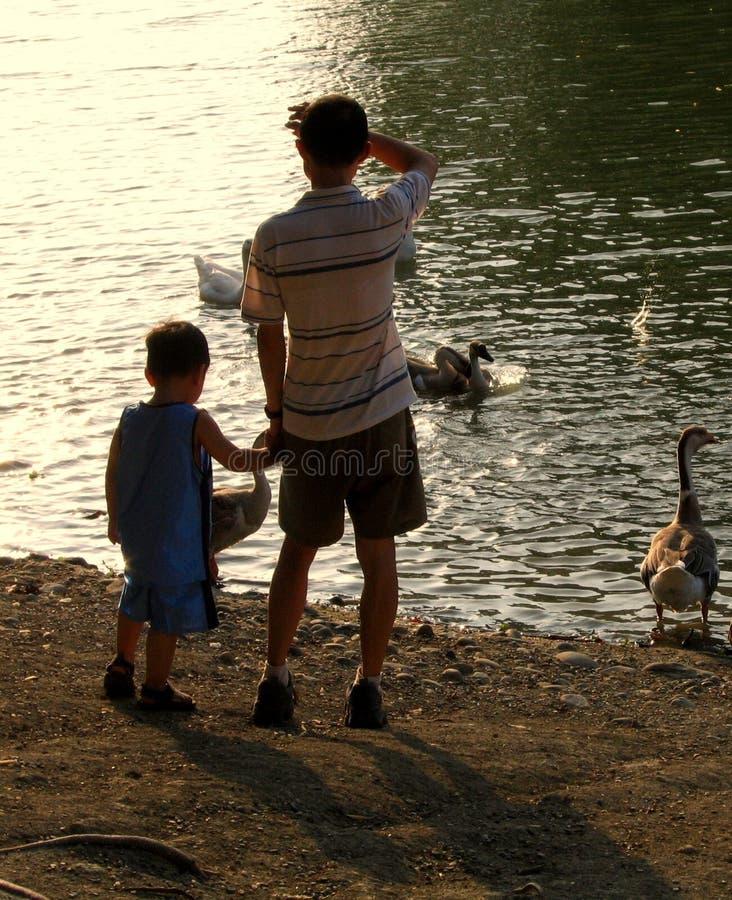 Download Kaczka ojca stawu synu obraz stock. Obraz złożonej z bliskość - 144033