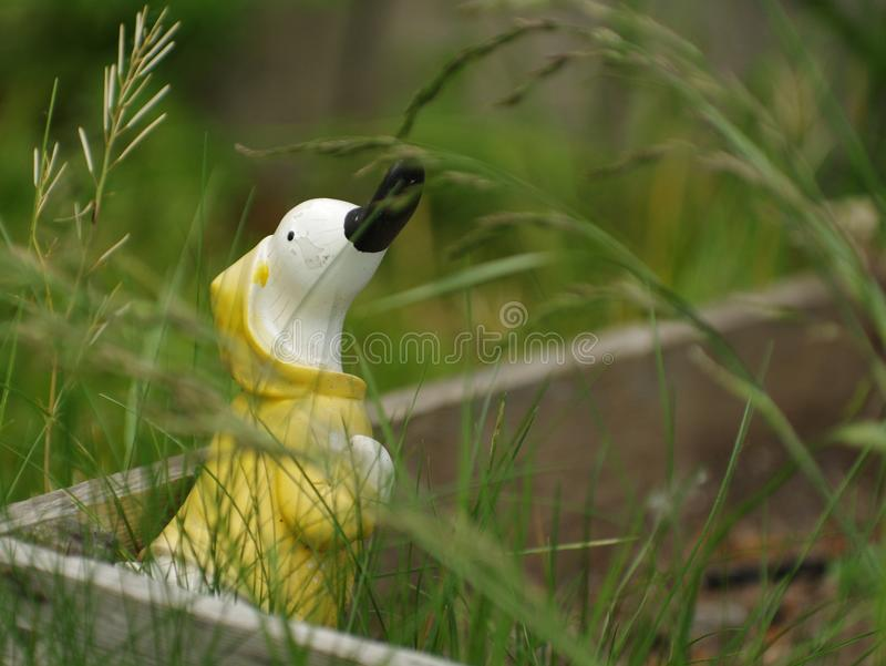 Kaczka w trawie zdjęcie stock