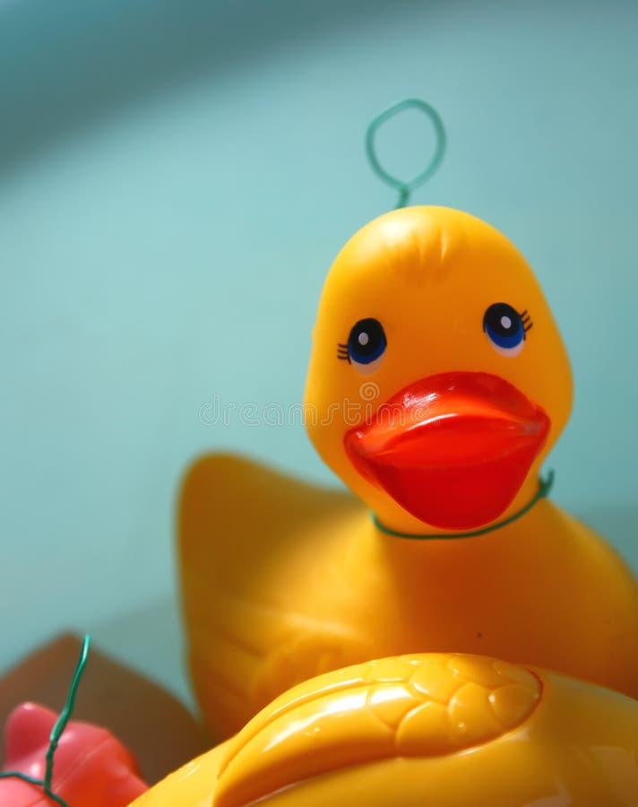 kaczki guma zdjęcie stock