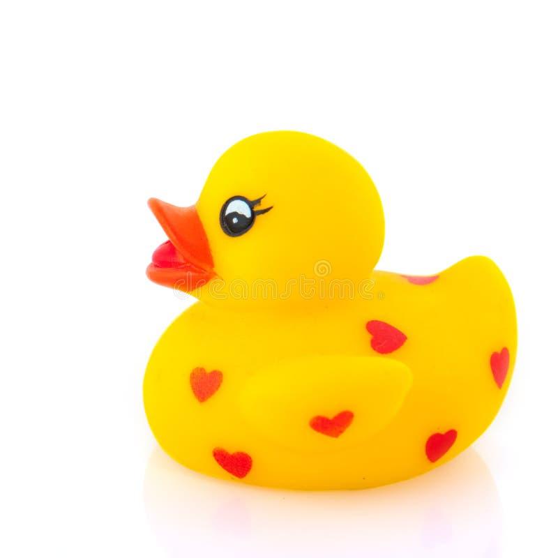 kaczki miłość obrazy royalty free