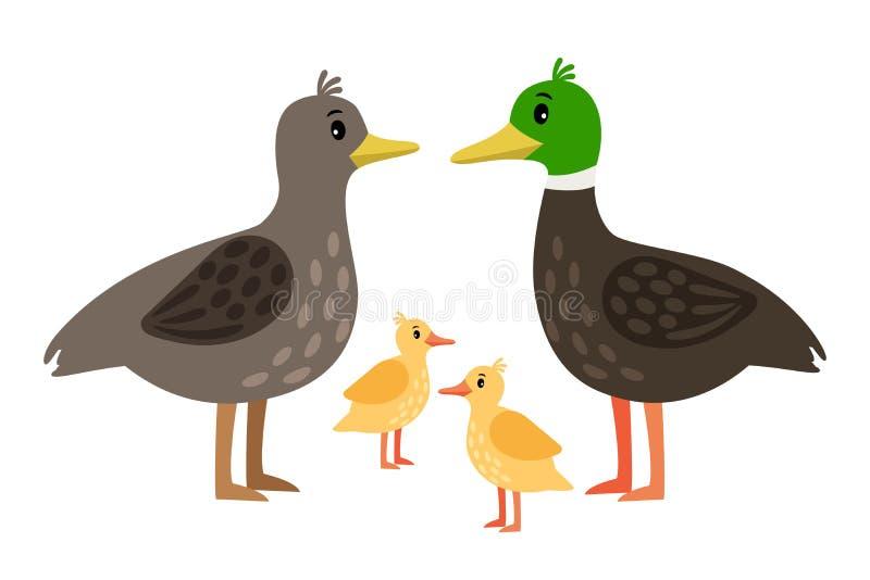 Kaczki rodzina Wektor matki kaczka, kaczor i mali kaczątka odizolowywający na bielu, ilustracji