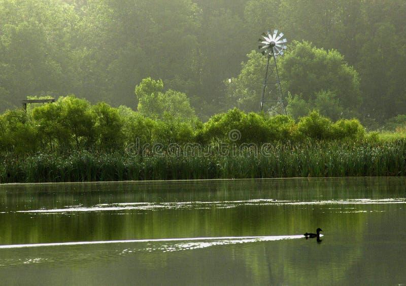 kaczki woda zdjęcia royalty free