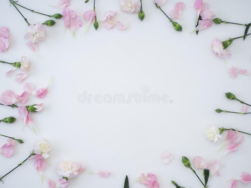 Kader dat van anjer op een witte achtergrond wordt gemaakt royalty-vrije stock afbeeldingen