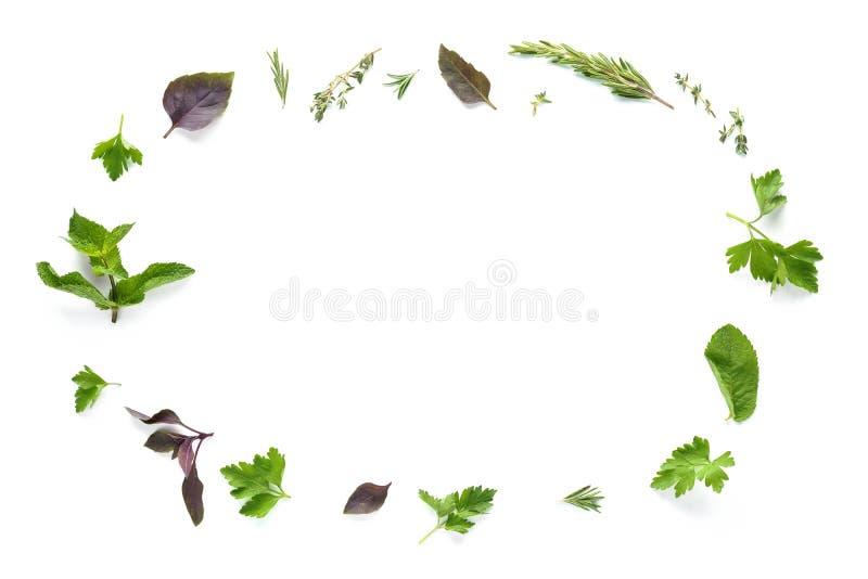 Kader dat van diverse verse kruiden wordt gemaakt die op witte achtergrond worden geïsoleerd royalty-vrije stock foto's