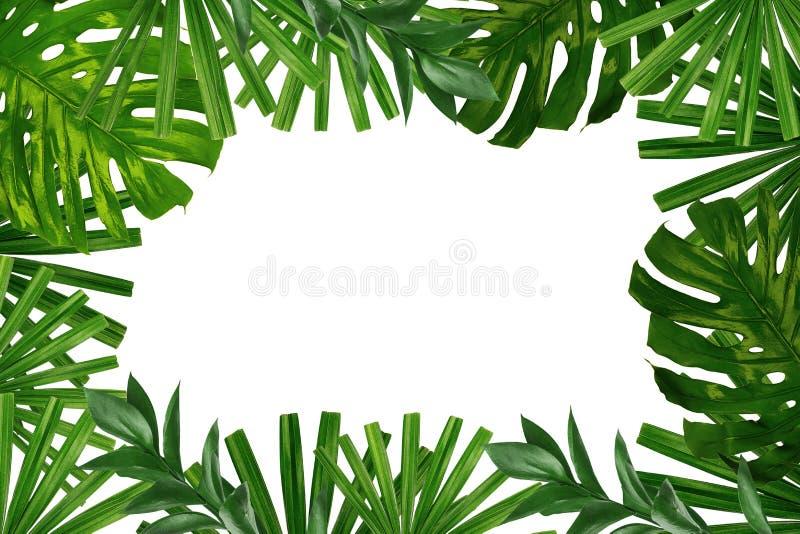 Kader dat van groene tropische bladeren op witte achtergrond wordt gemaakt royalty-vrije stock afbeelding