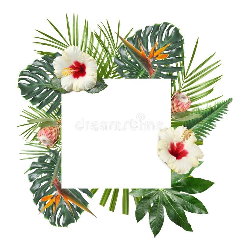 Kader dat van mooie tropische bladeren en bloemen op witte achtergrond wordt gemaakt Ruimte voor tekst royalty-vrije stock afbeeldingen