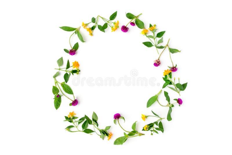 Kader Kleurrijk helder patroon van weidekruiden en bloemen op witte achtergrond Vlak leg, hoogste mening stock fotografie