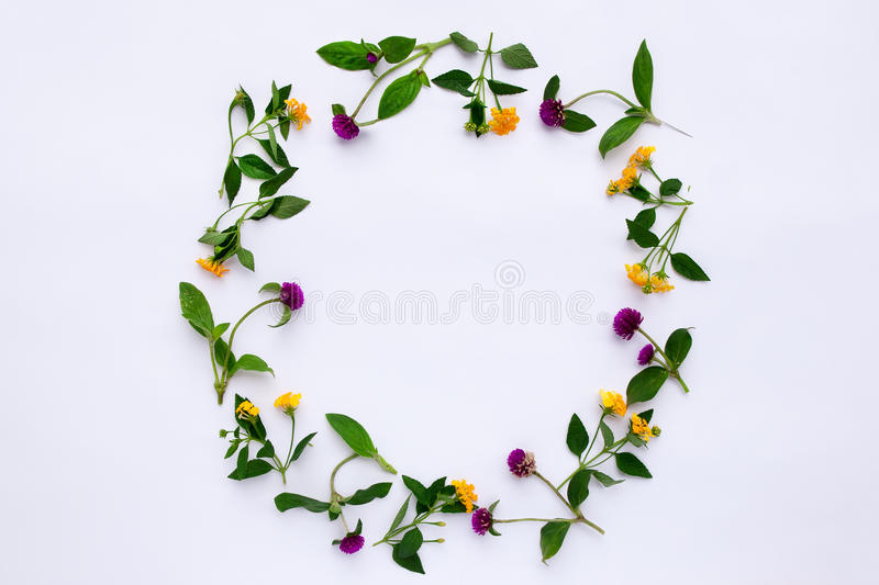 Kader Kleurrijk helder patroon van weidekruiden en bloemen op witte achtergrond Vlak leg, hoogste mening stock afbeeldingen